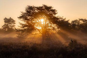Nebliger Sonnenaufgang von Frank Verburg