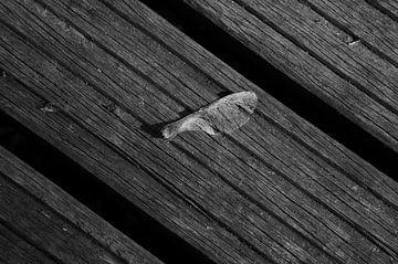 Helikoptertje op planken van een brug in zwart-wit van