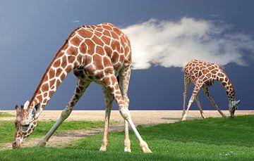giraffen yoga van Sigrid Klop