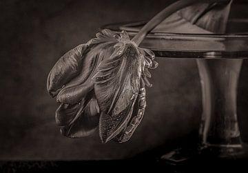 Black tulp. van natascha verbij