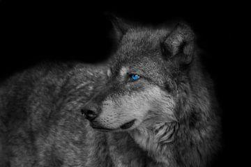 Wolf, Rocky Mountains wolf van Gert Hilbink