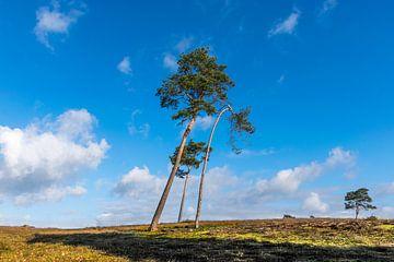 Drie kromme bomen van Patrick Verhoef
