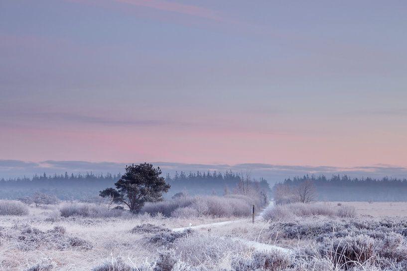 Koude winter morgen met zacht gekleurde lucht van Karla Leeftink
