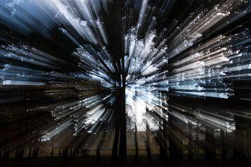 Zonlicht-kristallen bomen van Eddy Bakker