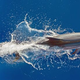 Springende dolfijn van Bob de Bruin