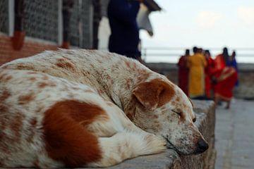 Hond bij tempel in Nepal van Marieke Funke