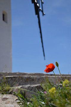 Mohnblume mit Windmühle La Mancha von Iris Heuer