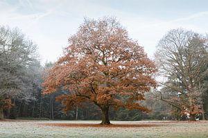 Tussen herfst en winter van