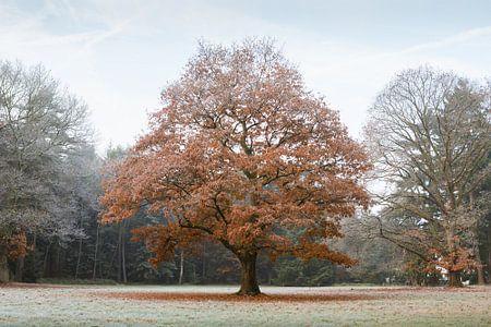 Tussen herfst en winter