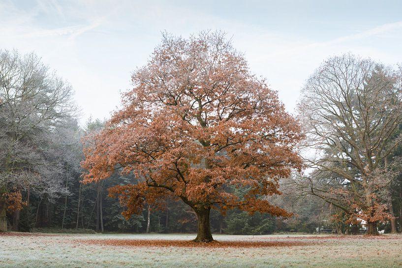 Tussen herfst en winter van Theo Klos