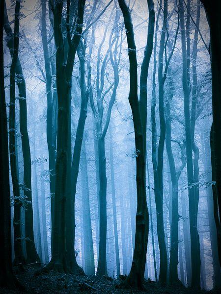 Mistig bos in een blauwtinten. van Mark Scheper