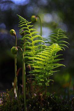 composition végétale sur