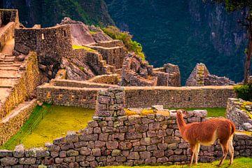 Lama geniet van uitzicht in Machu Picchu van John Ozguc