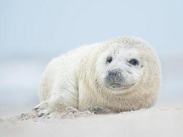 Zeehonden pup van Elles Rijsdijk