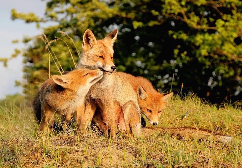 Fox van Frank Batenburg