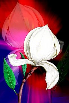 Magnolia van Gertrud Scheffler