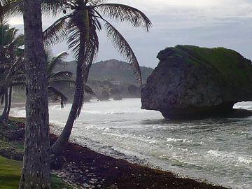 Barbados - East Coast von Daniel Chambers