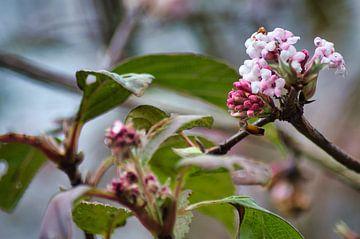 Minuscule bloemen