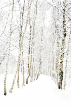 Berkenlaan in winterslaap sur René Kempes