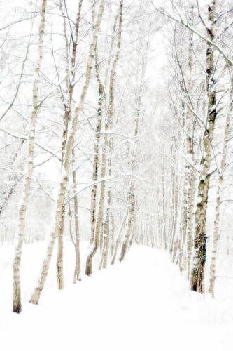 Berkenlaan in winterslaap
