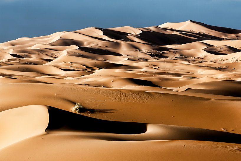 zandduinen bij dageraad in de woestijn van de Sahara in Marokko van Tjeerd Kruse