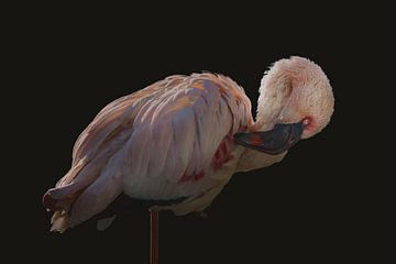 De roze Flamingo van Elianne van Turennout