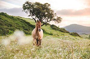 Paard bij zonsondergang van Sharon Zwart
