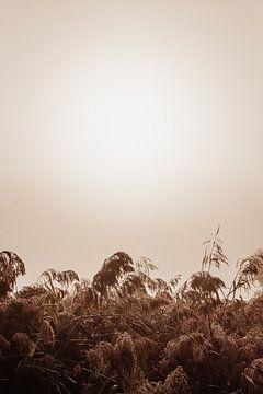 Schilf bei nebligem Sonnenaufgang von Oog in Oog Fotografie