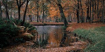 Waldfluss mit Enten von Inge Pots