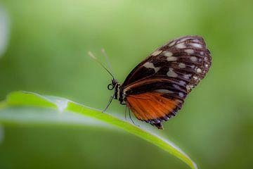 butterfly von Marcel Kelfkens