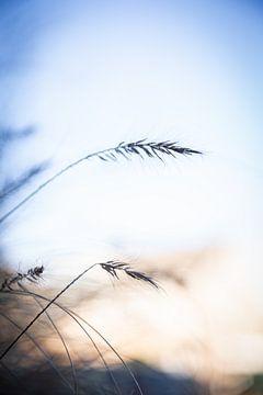 Hintergrundbeleuchtung von Danique van Gurp