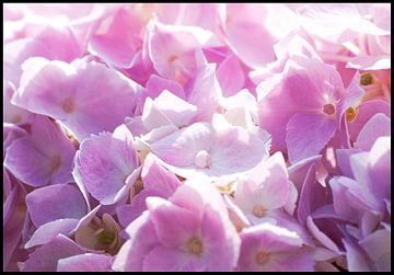Bloemen von Anuska Klaverdijk