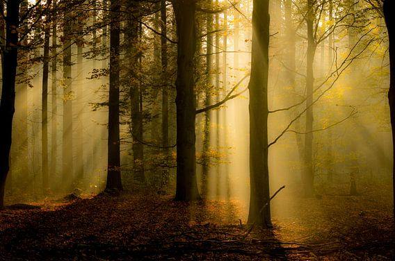 stralend herfstbos van Lex Scholten