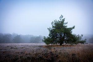 Eenzaam van Jan Peter Mulder