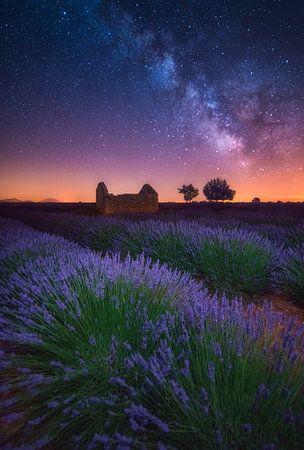 A Lavender Night von Albert Dros