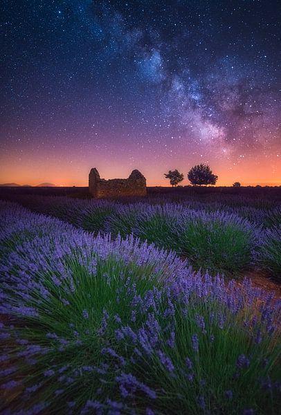 Een Lavendel Nacht van Albert Dros