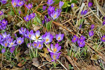 Frühling von Tjamme Vis