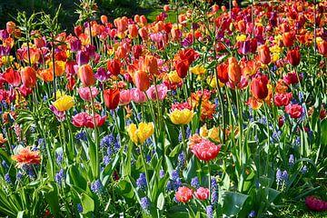 Bloemenzee van FotoGraaG Hanneke