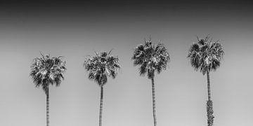 Palm idyll | Panorama Monochrome sur Melanie Viola