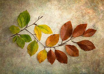 Feuilles d'automne du vert au brun sur Lorena Cirstea