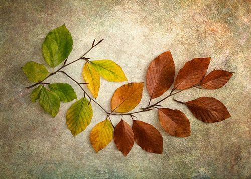 Herfstbladeren van groen naar bruin van Lorena Cirstea