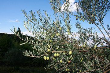 Olivenbaum von Floortje Mink