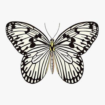 Vlinder zwart-wit van Jole Art (Annejole Jacobs - de Jongh)