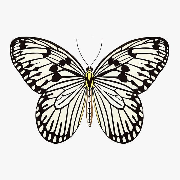 Schmetterling schwarz-weiß von Jole Art (Annejole Jacobs - de Jongh)