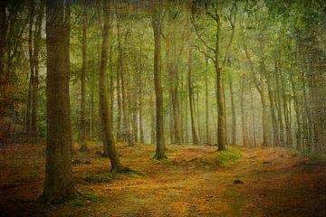 Herbstwald im Licht von Heike Hultsch