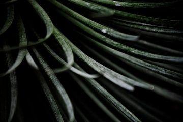 Palmengarten II von Insolitus Fotografie
