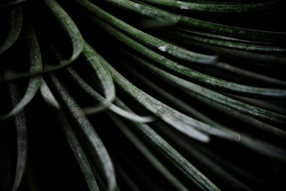 Palmengarten II van Insolitus Fotografie