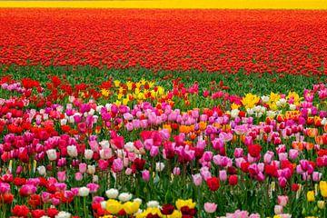 Kleurijke blollenvelden von Joke Beers-Blom