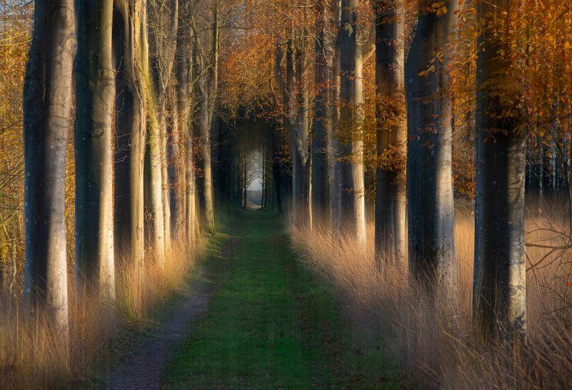 Boslaan in de herfst van Franke de Jong
