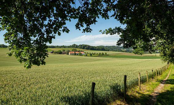 Typisch Limburgs Landschap in de buurt van Walem